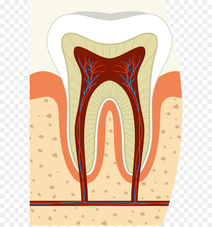 root canal dentistry endodontic therapy pulp root canal cliparts