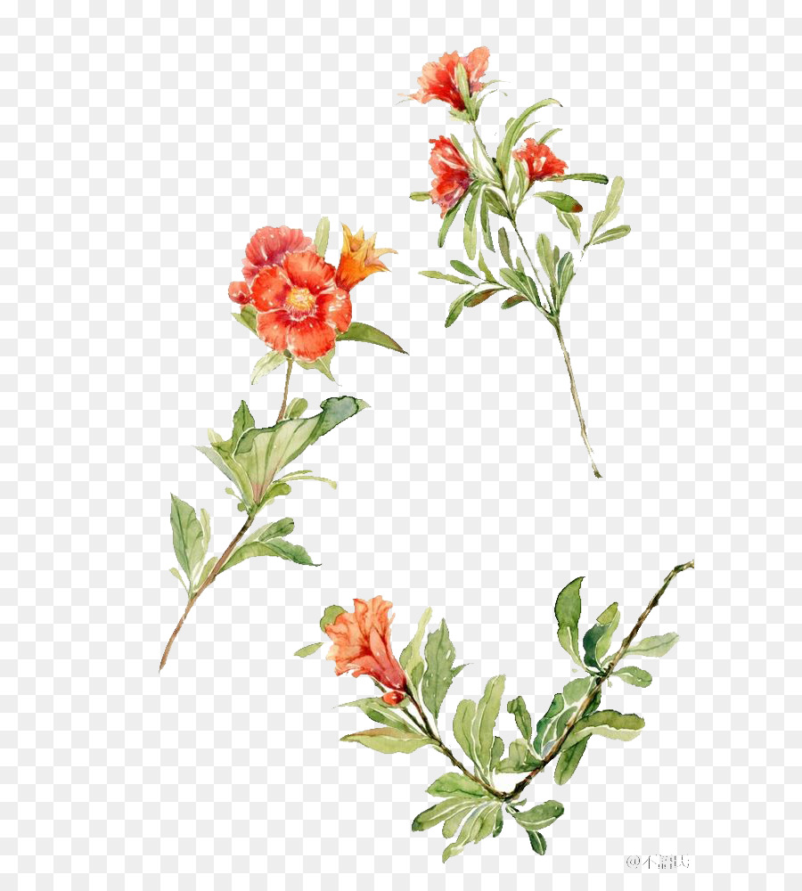 Red Watercolor Flowers png download - 658*982 - Free
