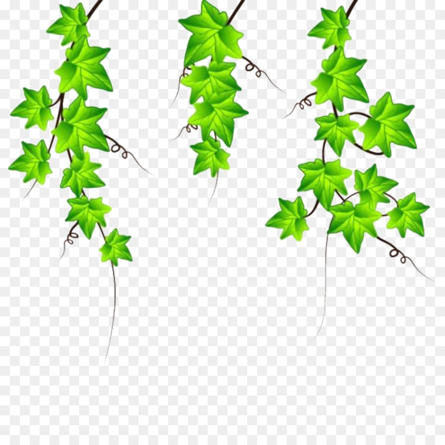 drawing ivy clip art vines are available for free download png rh kisspng com clip art vines and flowers clip art vines outline