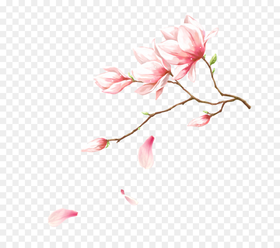 Pink Download Flower Handmade Magnolia Flowers Png Download 800