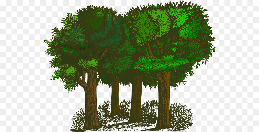 tree shrub free content clip art green forest trees clipart png