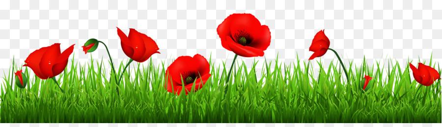 Remembrance Poppy Armistice Day Clip Art Poppy Cliparts Png