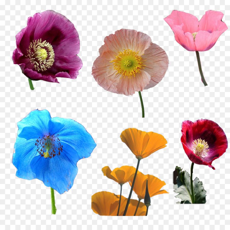 Opium poppy cut flowers poppy flowers png download 10001000 opium poppy cut flowers poppy flowers mightylinksfo