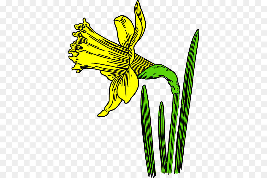 Daffodil Flower Black And White Drawing Clip Art Daffodil Cartoon