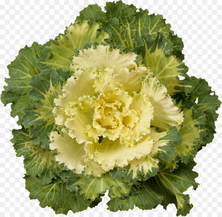 Cabbage Kale Cauliflower Brussels Sprout Broccoli Green Flowers