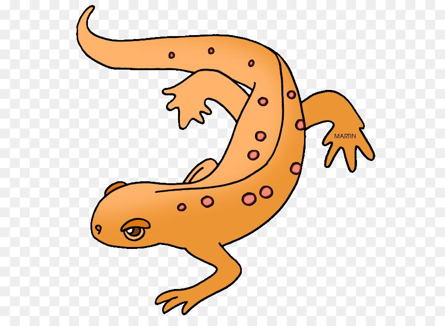salamander eastern newt clip art amphibian cliparts png download rh kisspng com newt clipart Salamander Clip Art