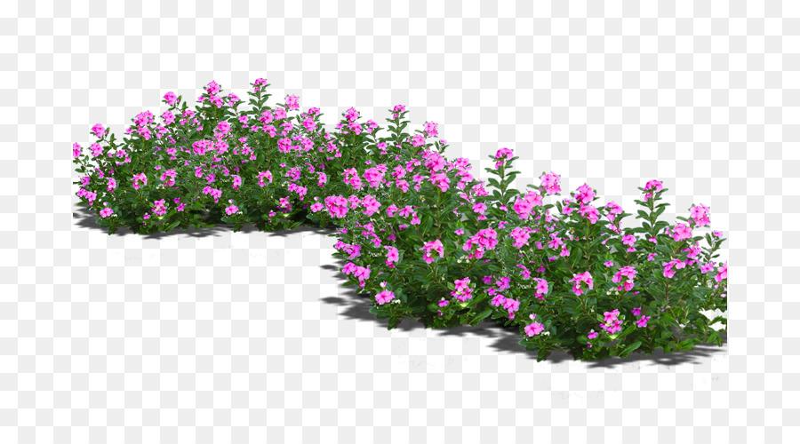 Bonsai flowerpot potted flowers png download 736481 free bonsai flowerpot potted flowers mightylinksfo