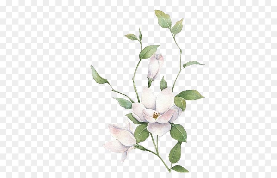 Jasmine Mo Li Hua White Flowers Png Download 510 562