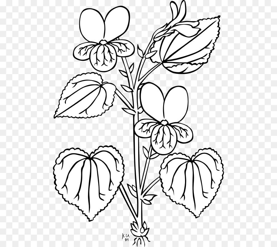 Line Drawing Violet : Viola glabella plant clip art sampaguita drawing png