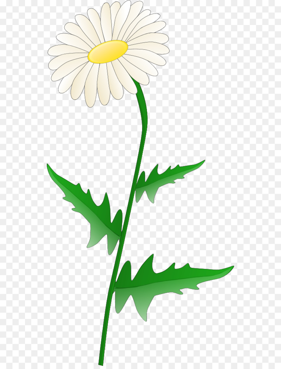 Free Content Common Daisy Clip Art Daisy Flower Clipart Png