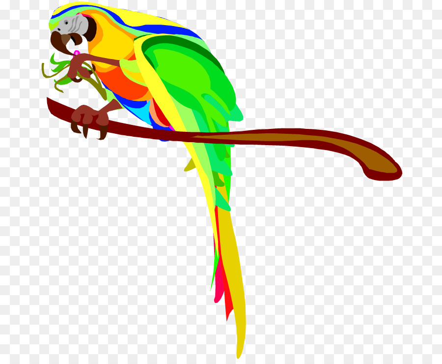 parrot bird macaw clip art cartoon pictures of parrots png rh kisspng com macaw clipart macaw clipart