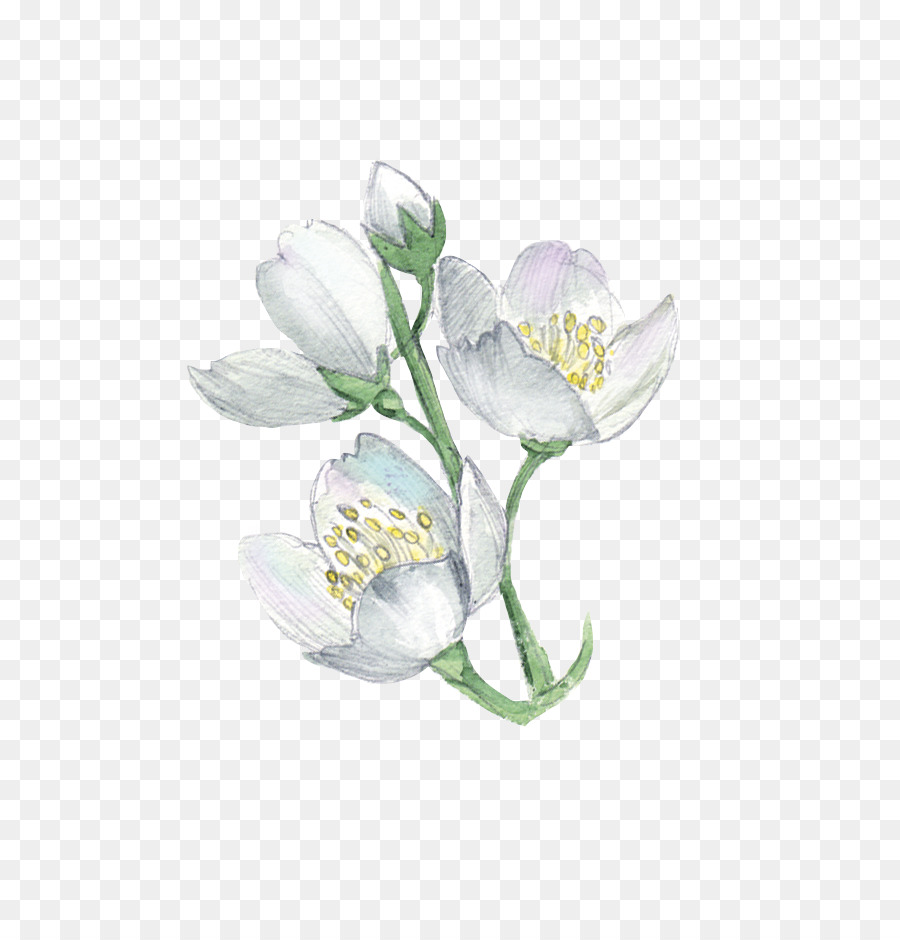 White Flower Plant Illustration Watercolor Flowers Png Download