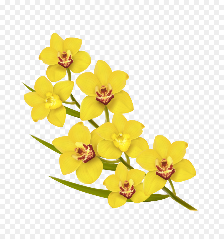 Flower Yellow Euclidean Vector Illustration Blooming Flowers