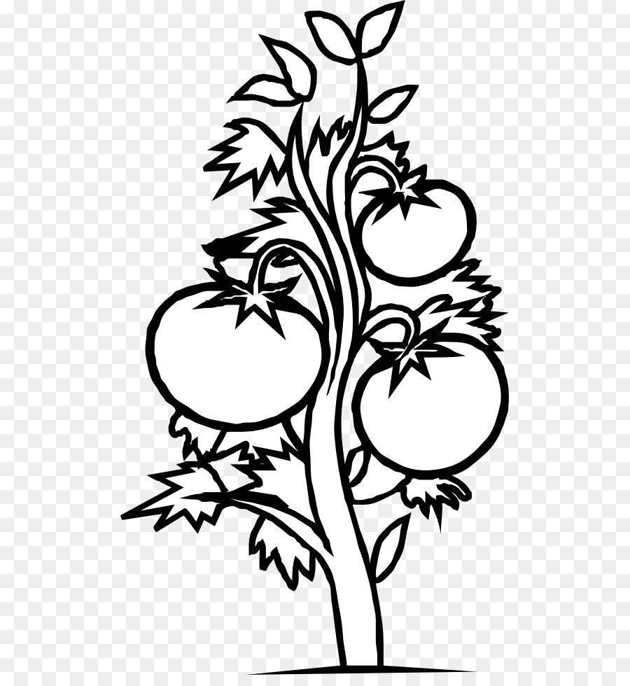 La planta de ciclo de vida del libro de Colorear de Tomate de la ...