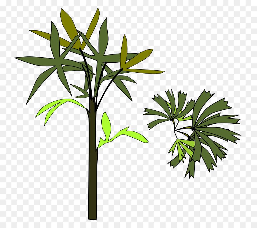 Arecaceae Rhapis excelsa Clip art - Shamu Coloring Pages png ...