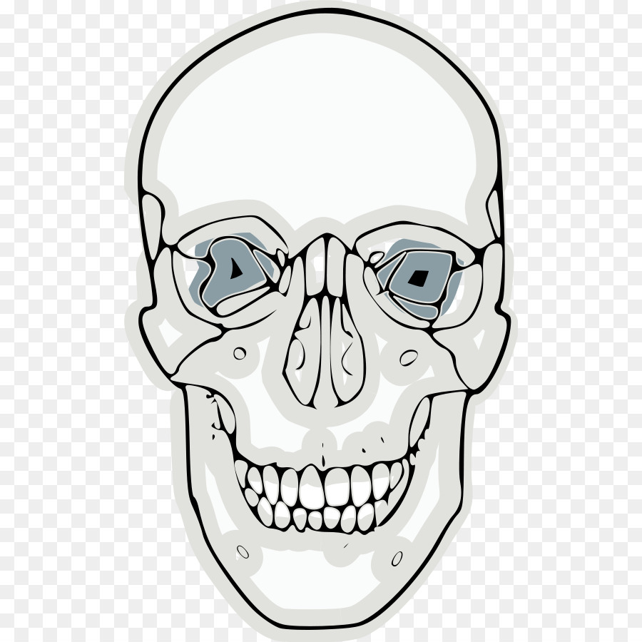 Skull Frontal bone Clip art - Funny Skull png download - 552*900 ...