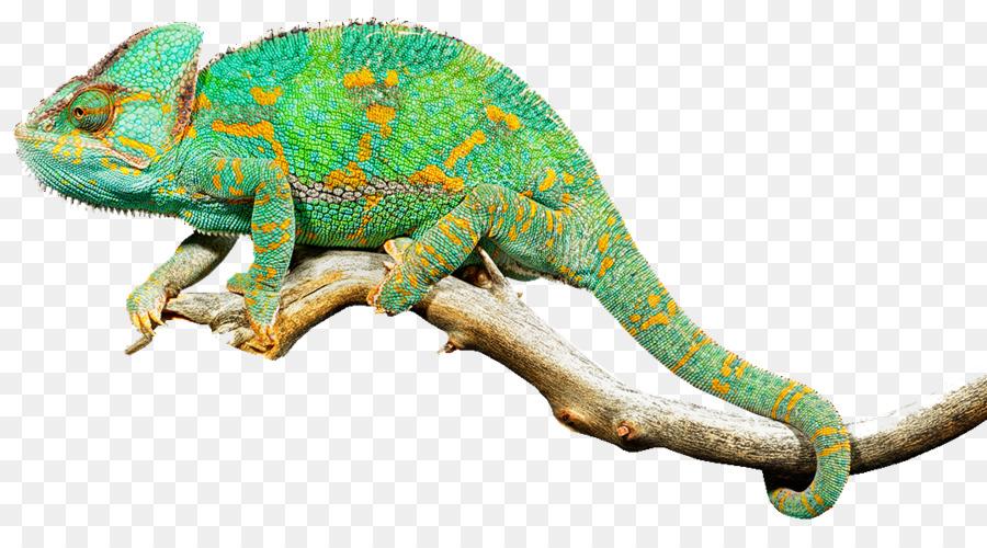 reptile lizard chameleons common iguanas clip art - free reptiles