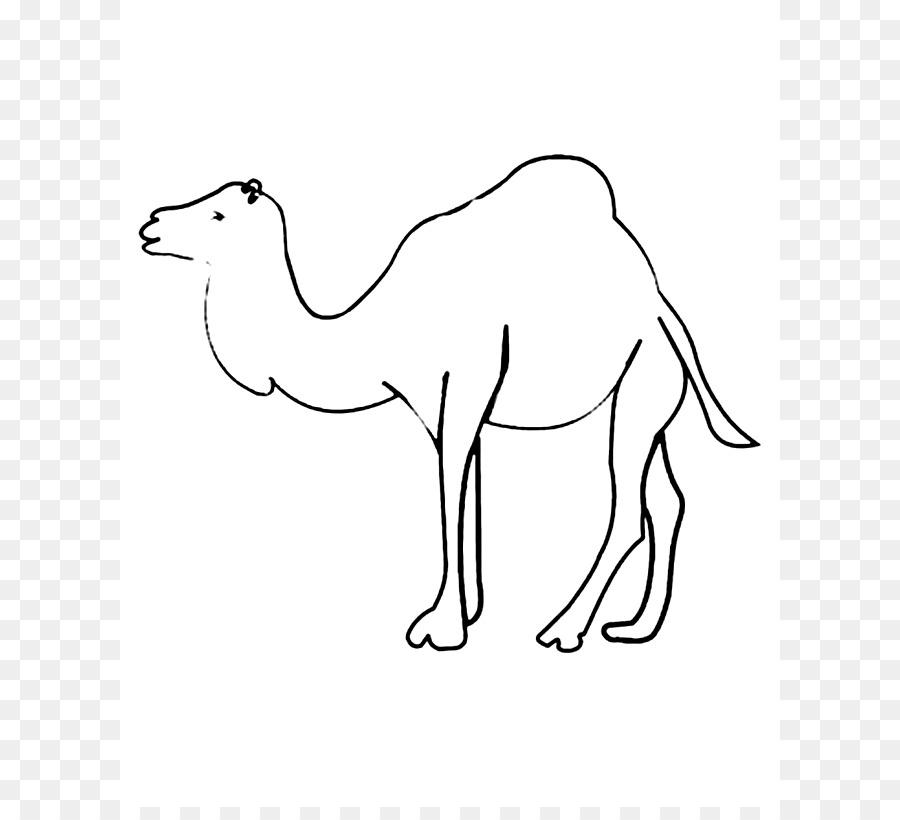 Camello bactriano Dromedario libro para Colorear, Dibujo de Niño ...