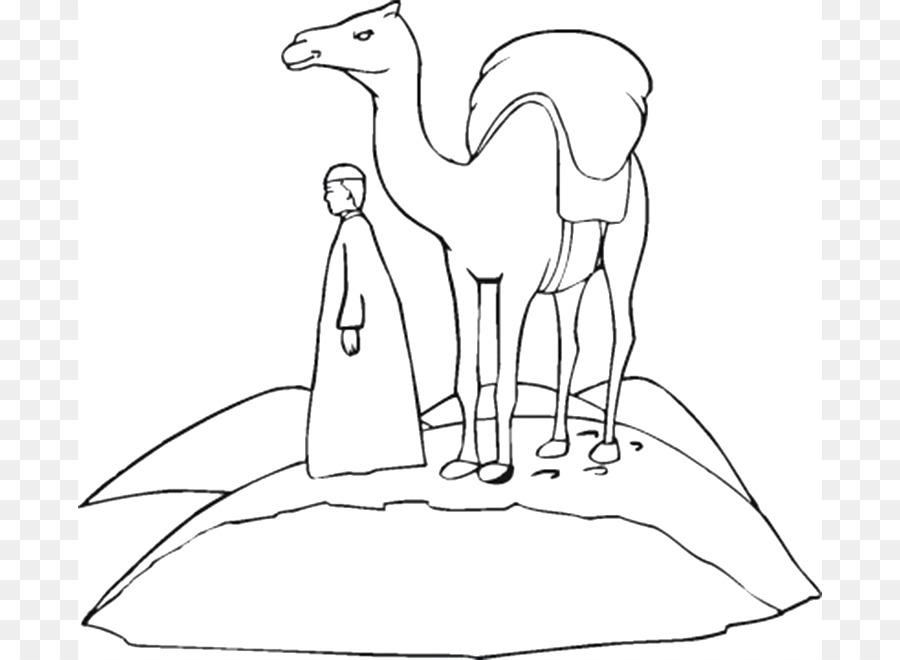 Dromedario, el camello Bactriano libro para Colorear de Niño Camello ...