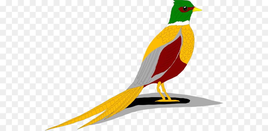 green pheasant bird clip art pheasant cliparts png download 600 rh kisspng com pheasant clipart pheasants clipart