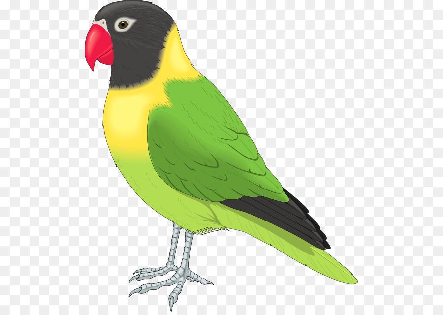 lovebird parrot clip art love bird clipart png download 555 633 rh kisspng com love bird cage clipart lovebird clipart