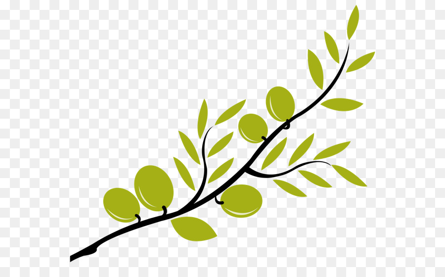 Olive Branch Mediterranean Cuisine Clip Art Transparent Branch