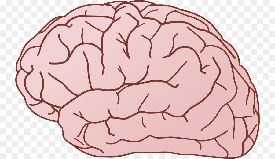 brain free content clip art brain cliparts transparent png rh kisspng com Thinking Brain Clip Art brain clipart free