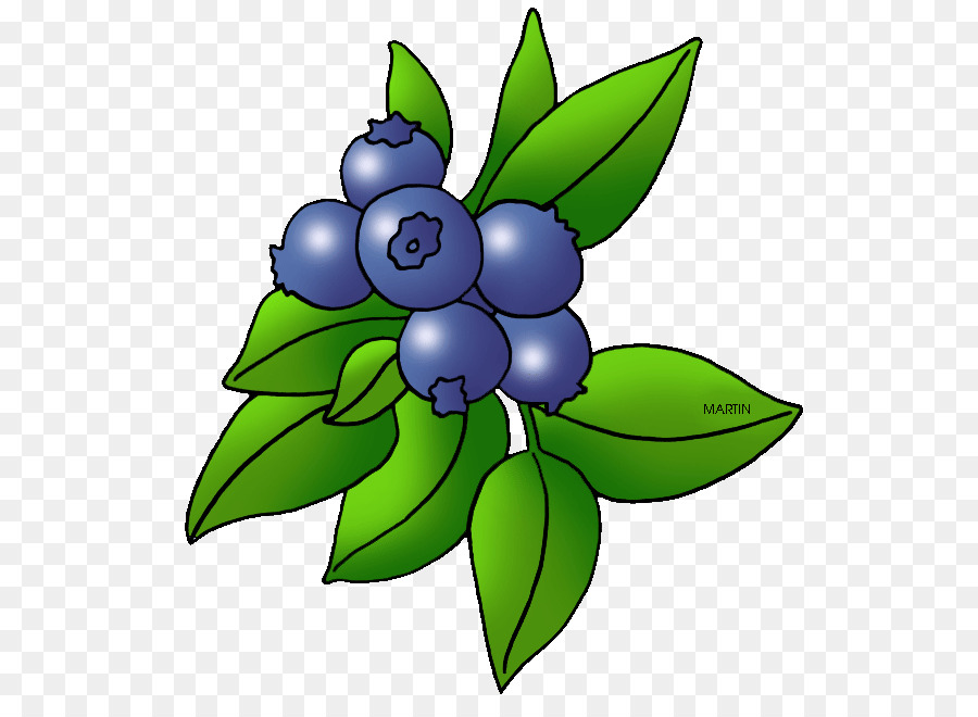 Blueberry Blackberry Fruit Clip art - Berry Cliparts png ...
