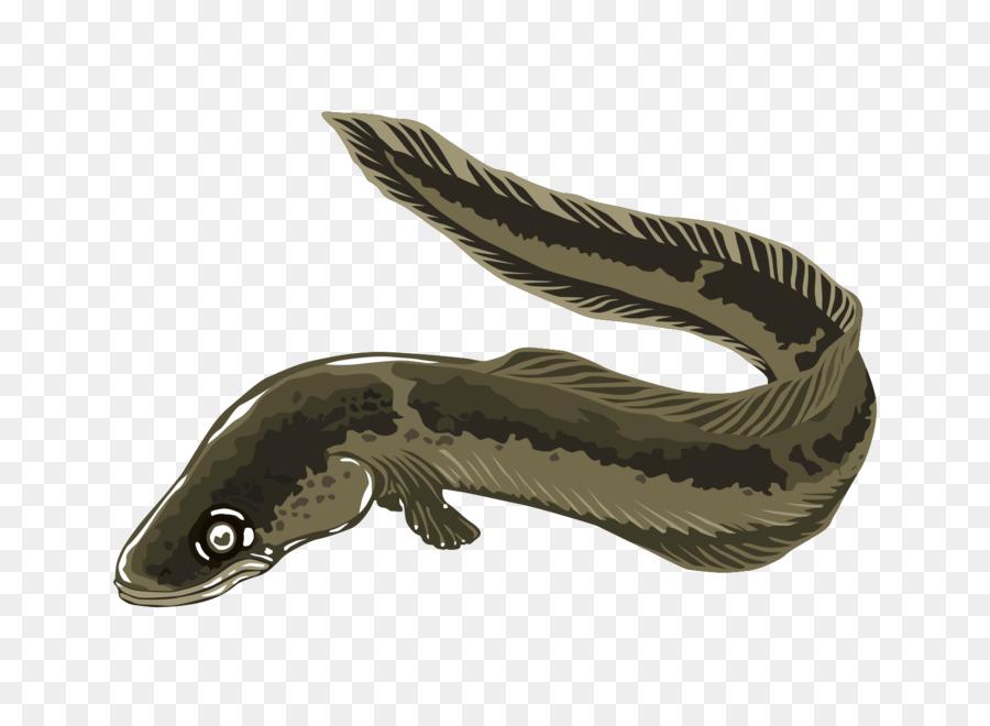electric eel clip art eel cliparts png download 1640 1192 free rh kisspng com eel clipart images eel fish clipart