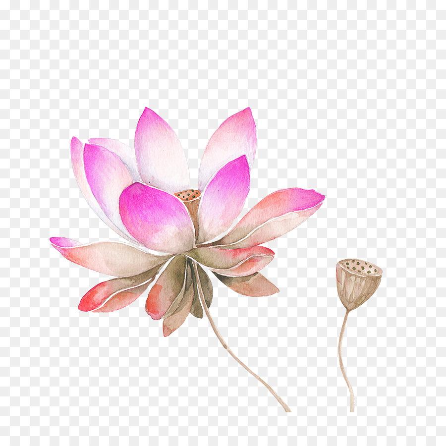 Nelumbo nucifera watercolor painting drawing flower sketch pink nelumbo nucifera watercolor painting drawing flower sketch pink watercolor lotus flower decorated pattern mightylinksfo