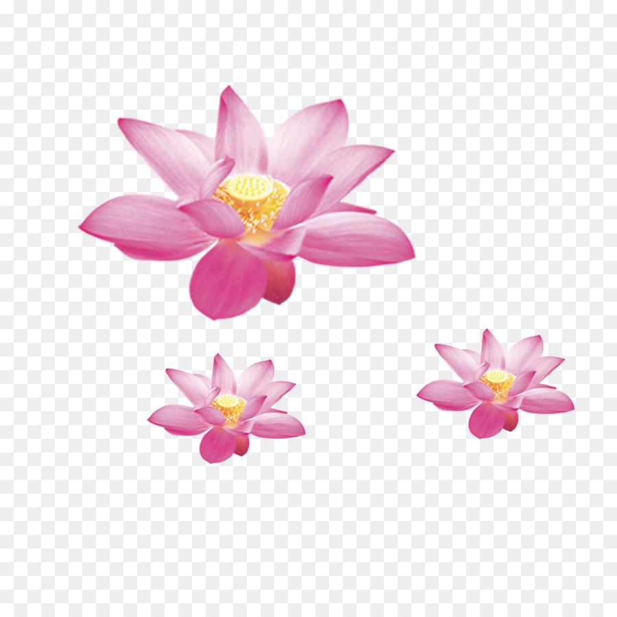 Nelumbo Nucifera Symbol Flower Lotus Png Download 10001000