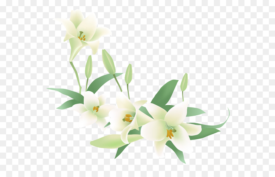 Flower Jasmine Euclidean Vector Clip Art