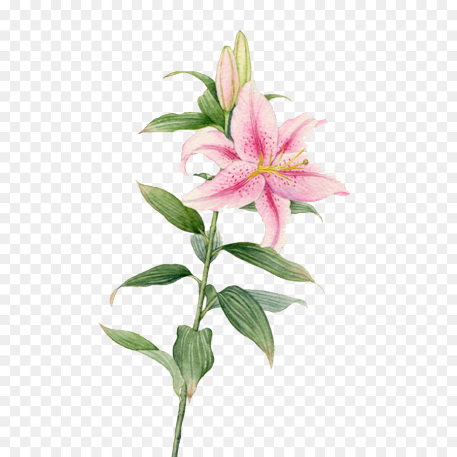 Flower Watercolor Painting Lilium Creative Lily Flowers Png