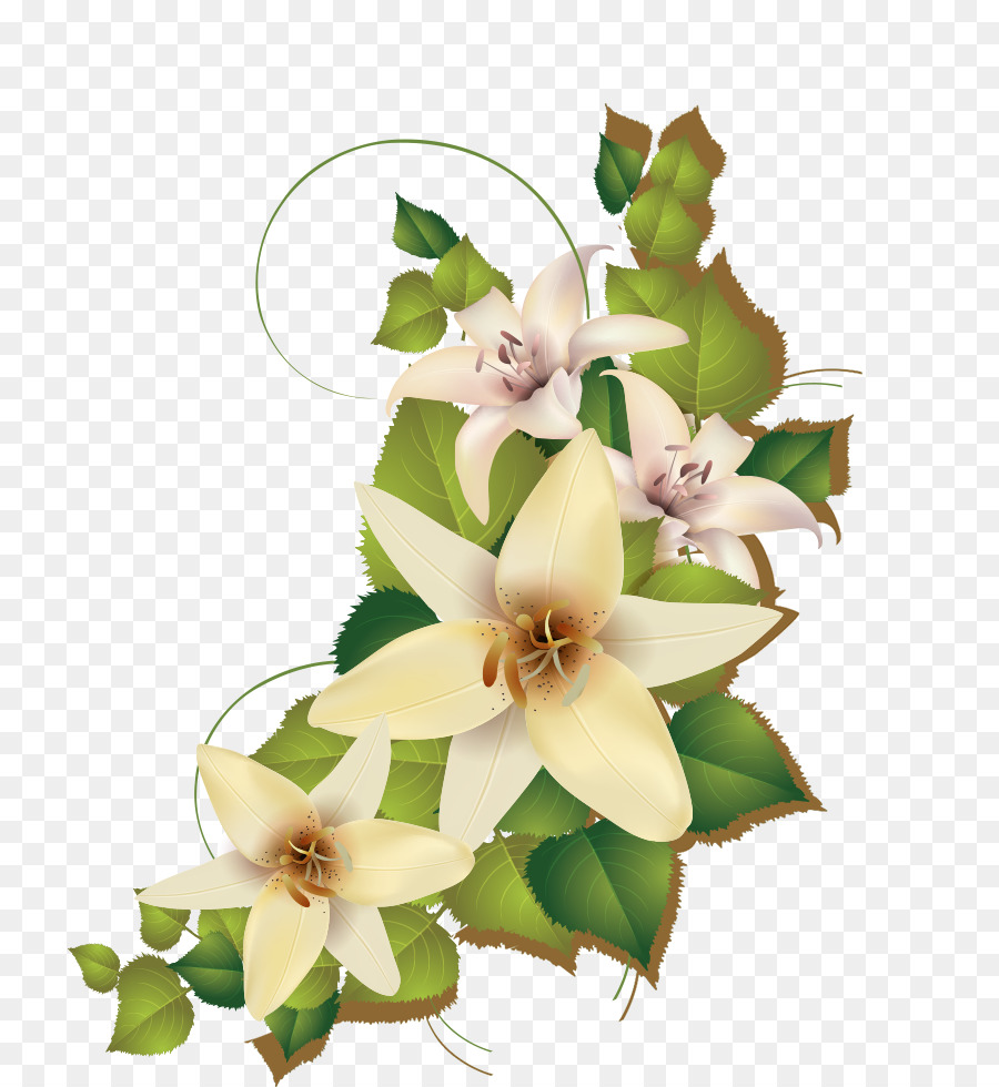 Lily Cluster Png Download 887980 Free Transparent Plant Png