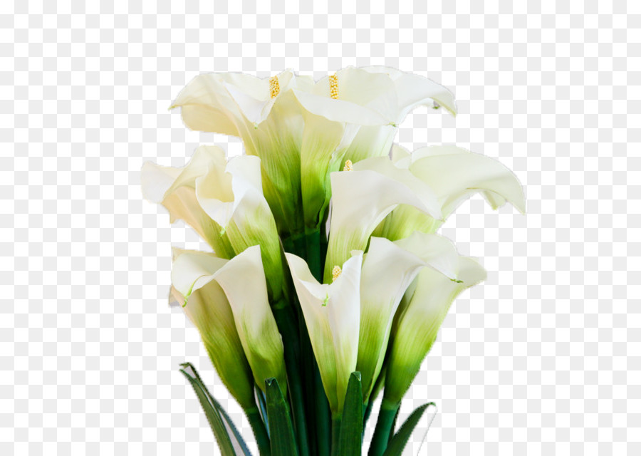 Arum-lily Flower Floristry - A bunch of open up the calla lily png ...