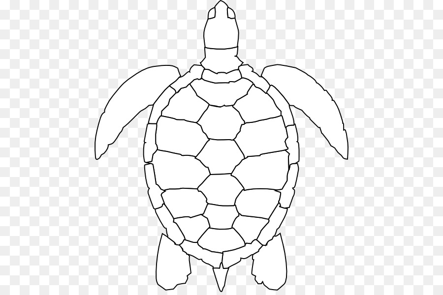 Green Sea Turtle Drawing Clip Art Turtle Outline