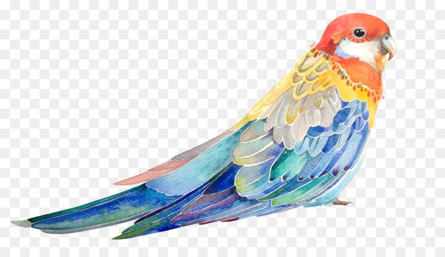 Kuş Papağan Boyama Suluboya Illüstrasyon El Boyaması Kuş Papağan