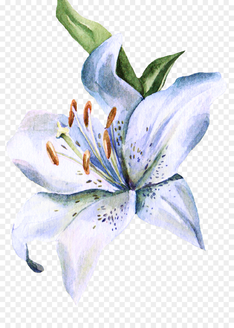 Lilium Watercolor Painting Watercolour Flowers Ink Wash Painting