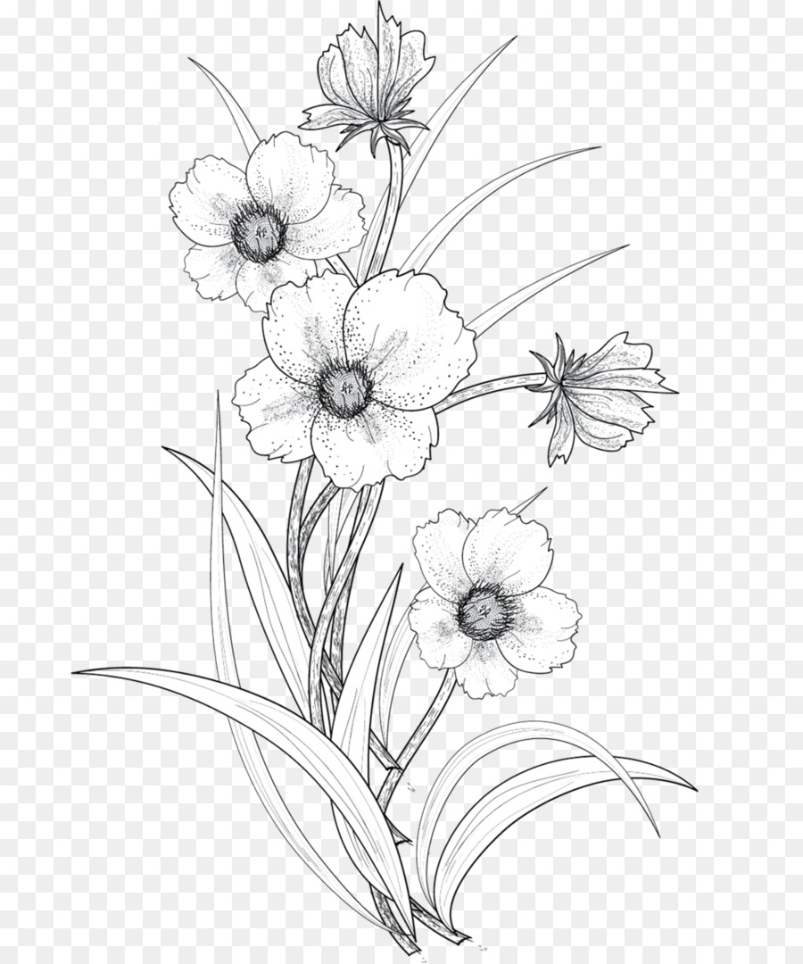Drawing flower line art art monochrome photography png