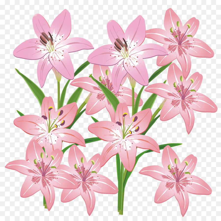Cut flowers lilium pink lily vector material png download 1667 cut flowers lilium pink lily vector material izmirmasajfo
