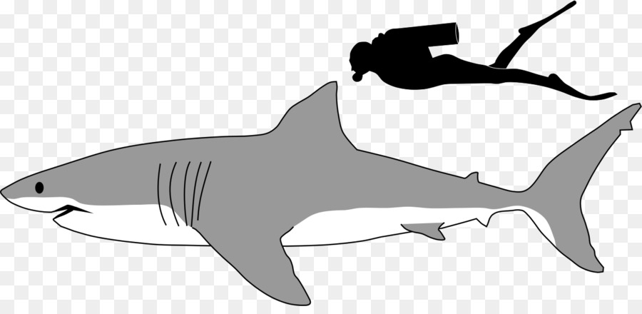 great white shark megalodon lamniformes tiger shark clip art black rh kisspng com