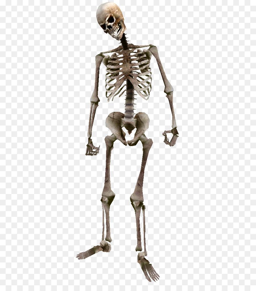 Oblivion The Elder Scrolls: Arena Human skeleton Bone - Beast ...