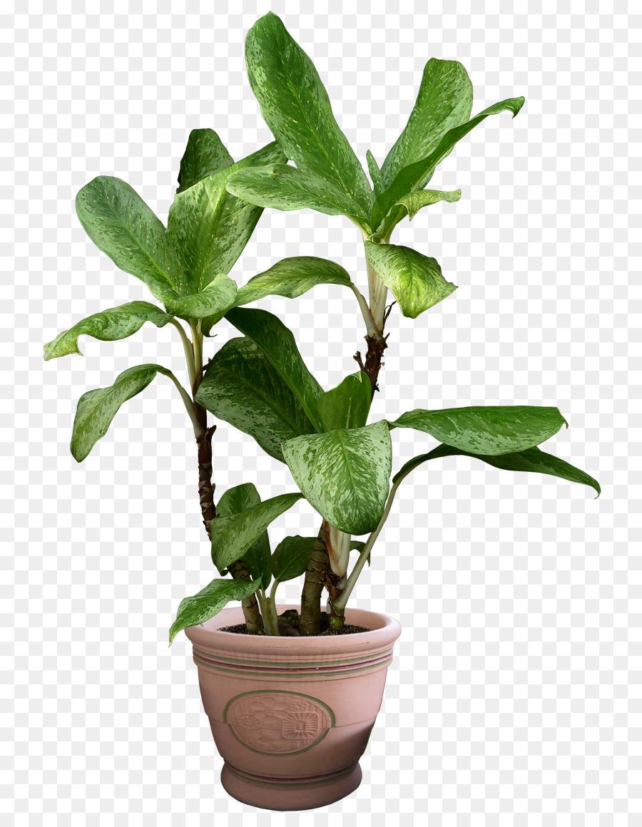 Beautiful Transparent Plants Image Png Download 840 1160