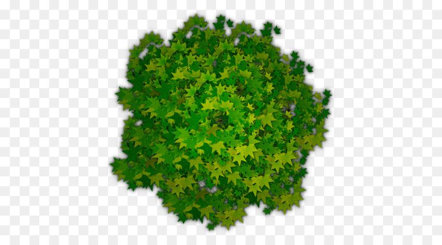 Tree Shrub Clip Art Photoshop Tree Top View Png Png