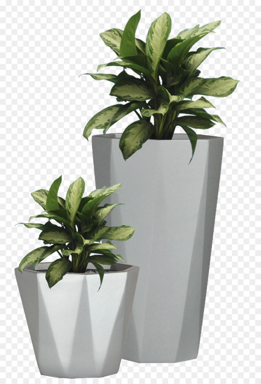 Flowerpot Etsy Wall Decal Succulent Plant Potted Plant
