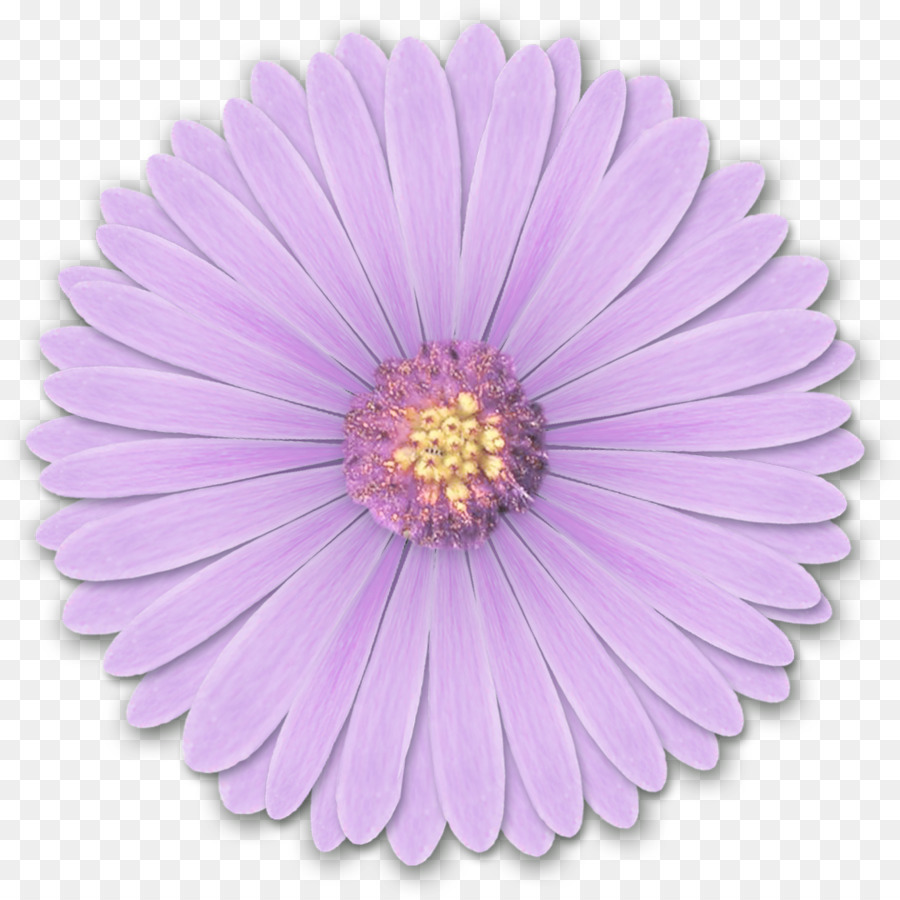 light flower desktop wallpaper purple res light purple