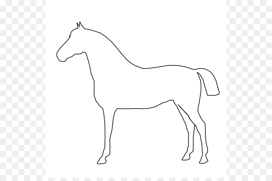 Walking Horse Outline: Tennessee Walking Horse Conformation Of The Horse Drawing