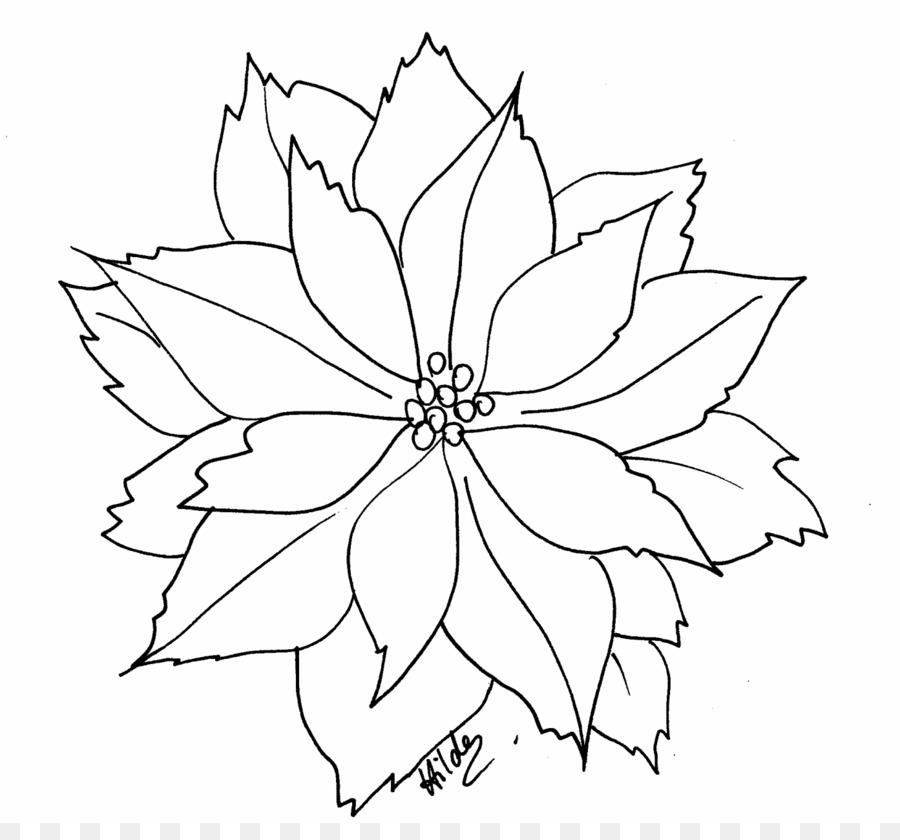 Poinsettia Libro Da Colorare Fiore Di Natale Clip Art Stella Di