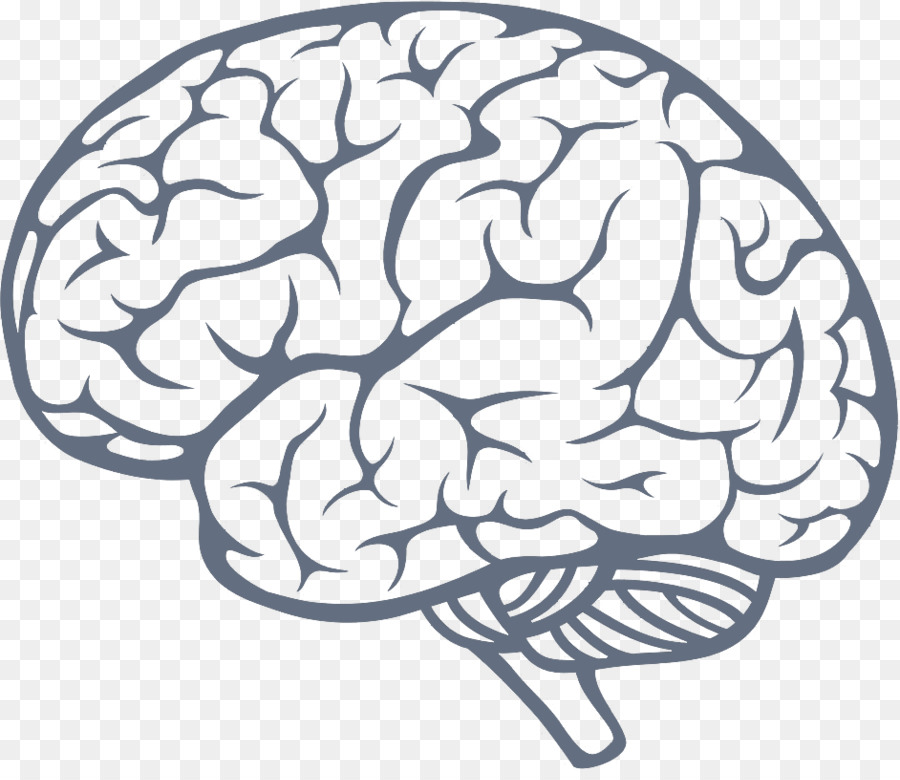 Human Brain Drawing Illustration Brain Ico Png Download 942808