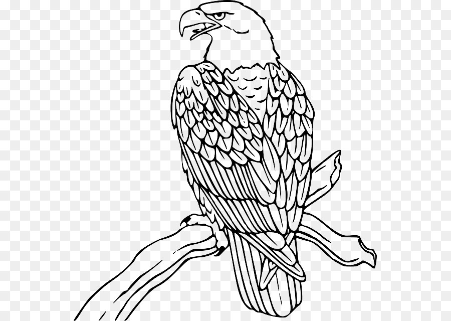 Bald Eagle Philippine Eagle Clip Art